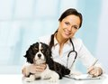 Young veterinary with spaniel positive brunette woman taking notes on tablet pc Royalty Free Stock Images