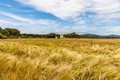 Young wheat growing in green farm field under cloudy blue sky Royalty Free Stock Photo