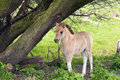 Young wild foal Stock Images
