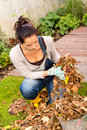 Young woman autumn gardening cleaning leaves in bucket Royalty Free Stock Image