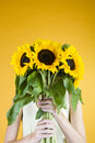A Young Woman Behind A Bunch Of Sunflowers Royalty Free Stock Photo