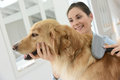 Young woman brushing dog's hair Royalty Free Stock Photo