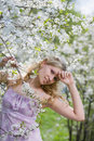 Young woman at a cherry tree in blossom Stock Photography
