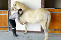 Young woman cleans the horse x s hooves beautiful brunette Stock Photos