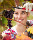 Young woman cutting a bunch of grapes in vineyard being picking by female vintner Royalty Free Stock Photo