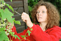 Young woman cutting climber plant Royalty Free Stock Photo
