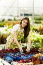 Young woman in flower garden gardening at sunny day Royalty Free Stock Images