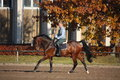 Young woman galloping on brown horse in autumn Royalty Free Stock Photography