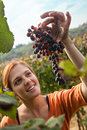 Young Woman Harvesting Grape Royalty Free Stock Photo