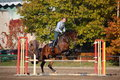 Young woman jumping barrier on brown horse in autumn Royalty Free Stock Photos
