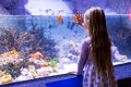 Young woman looking at starfish-tank Royalty Free Stock Photo