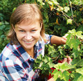 Young woman picking fresh organic black currant Royalty Free Stock Photo