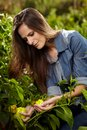 Young woman picking paprika gardener outdoor in the garden with selective focus Royalty Free Stock Image