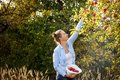 A young woman picks apples in an orchard on a sunny autumn afternoon. Healthy lifestyle concept Royalty Free Stock Photo