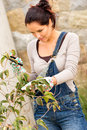 Young woman pruning tree bush autumn garden clippers backyard hobby housework Royalty Free Stock Photo