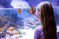 Young woman touching a starfish tank at the aquarium Stock Image