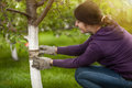 Young woman tying band on tree bark to prevent insects portrait of Royalty Free Stock Photo