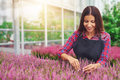 Young woman working in a greenhouse tending plants successful entrepreneur her nursery as she cultivates them for sale Royalty Free Stock Photo
