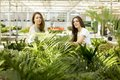 Young women in flower garden gardening at sunny day Royalty Free Stock Image