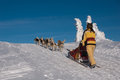 Young women-musher on trail of Sedivaceks long Stock Photos
