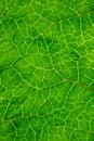 Yttersida av leafen Royaltyfria Foton