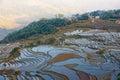 Yuanyang rice fields in Yunnan province, China Royalty Free Stock Photo
