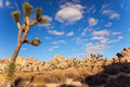 Yucca Brevifolia Joshua Tree National Park Califo Royalty Free Stock Photo