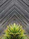 Yucca or cactus plant abstract with diagonal planks of wood in t Royalty Free Stock Photo