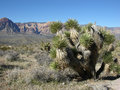 Yucca plant in the foreground and part of Red Rock Canyon, Nevada Royalty Free Stock Photo