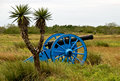 Yucca tree and cannon on battlefield Royalty Free Stock Photo