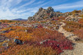 Yukon arctic tundra in fall colors blazing Stock Images