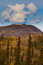Yukon Gold - Fall in Yukon Territory, Canada Stock Images