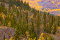 Yukon Gold - Fall in Yukon Territory, Canada Royalty Free Stock Photos
