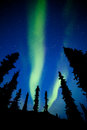 Yukon taiga spruce northern lights aurora borealis intense bands of or or polar dancing on night sky over boreal forest trees of Stock Image