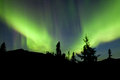 Yukon taiga spruce northern lights aurora borealis intense bands of or or polar dancing on night sky over boreal forest trees of Stock Photo
