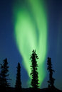 Yukon taiga spruce northern lights aurora borealis intense bands of or or polar dancing on night sky over boreal forest trees of Royalty Free Stock Photography