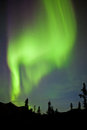 Yukon taiga spruce northern lights aurora borealis intense bands of or or polar dancing on night sky over boreal forest trees of Royalty Free Stock Image