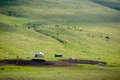 Yurt and livestock in kyrgyzstan tien shan mountains Royalty Free Stock Photo