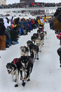 Zach Steer Begins the Yukon Quest Stock Image