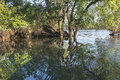 Zambezi river some aquatic plants in the Royalty Free Stock Photos