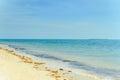 Zanzibar coastline pristine clear of tanzania Stock Image