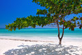 Zanzibar tropical tree at the beach Stock Photography