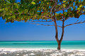 Zanzibar tropical tree at the beach white sand and blue water Stock Photography