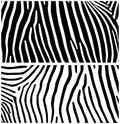 Zebra. Animal background