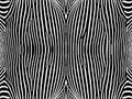 Zebra. Animal background.