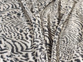 Zebra blanket animal Stock Photo