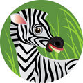 Zebra cartoon Stock Images