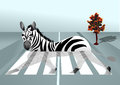 Zebra in the city abstract background with crossing Royalty Free Stock Photography