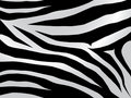 Zebra design Royalty Free Stock Image