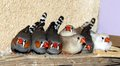 Zebra finches Royalty Free Stock Photo